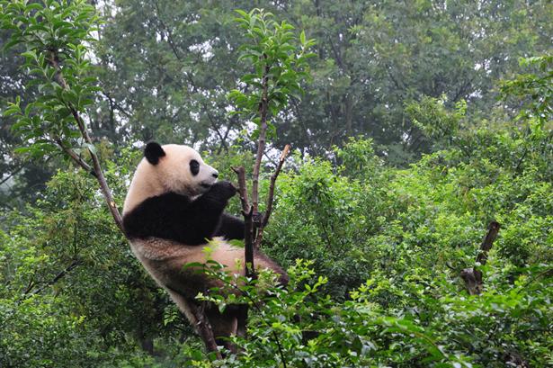 Travel Guide to Chengdu, China