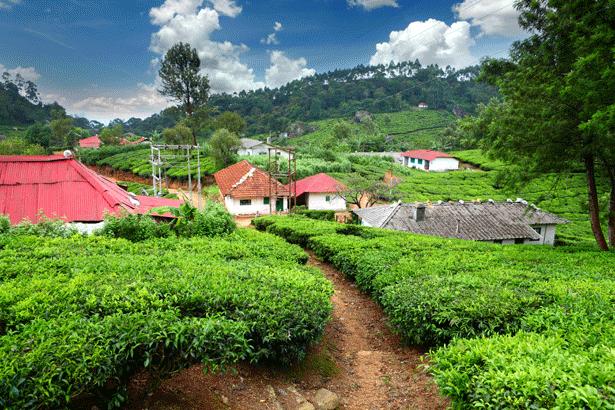 Travel Guide to Kerala, India