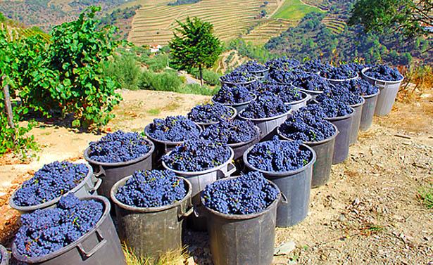 Best Port Wines to Start a Wine Wardrobe