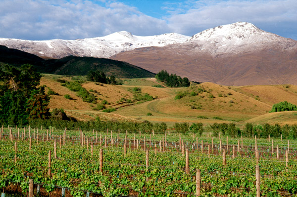 The Best of New Zealand Wines and Wineries