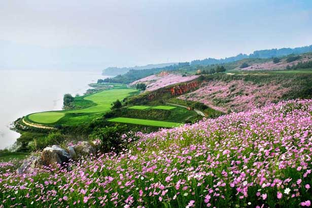 springs resort golf programs