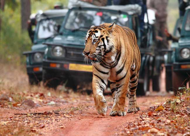 Eco-Tourism in Bandhavgarh Tiger Reserve